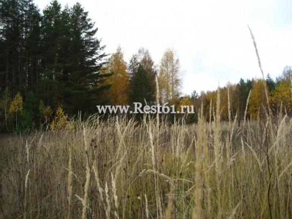 александровский лес рыбалка